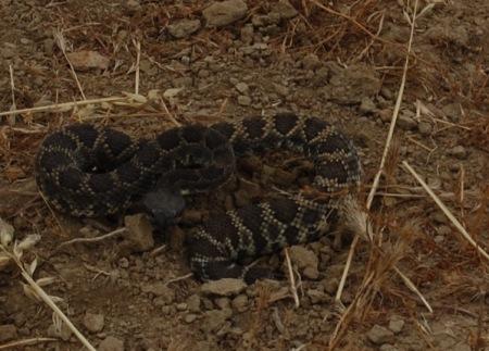 snake 090620